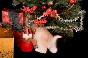 How to Keep Kitty Out of the Christmas Tree