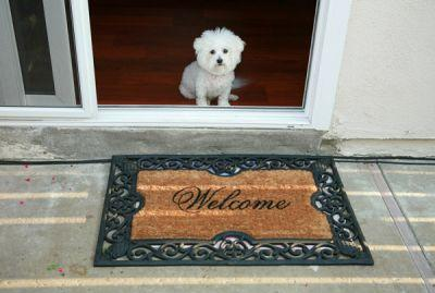 Moving with Dogs: How to Introduce Your Pup to Your New Home
