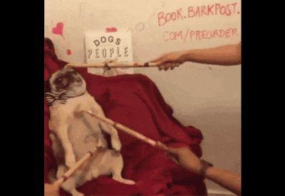Diary Of An Honest Day's Work, By Noodle The Pug
