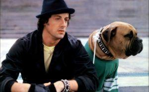 """Sly Stallone Posts Tribute To His Beloved Dog 41 Years After """"Rocky"""""""