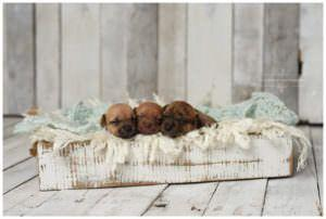 Photographer Does Adorable Newborn Photo Shoot For Foster Puppies, World Melts