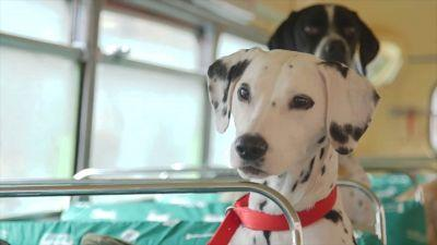 Take a ride on London's first tour bus for dogs