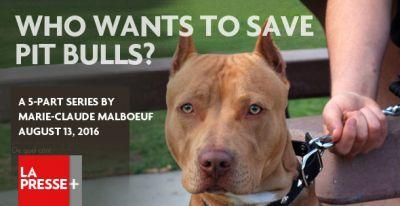Back Story of the Montreal Pit Bull Ban, What the Vets Omitted and Cited in Their Report and How the Pit Bull Lobby Operates