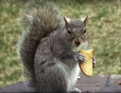 Watch these squirrels go NUTS!