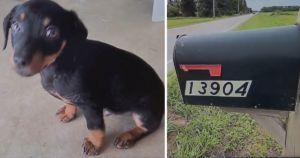 Woman Finds Helpless Puppy Trapped In Her Hot Mailbox