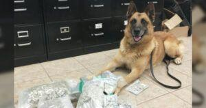 Police K9 Retires After 10 Yrs, Leaving New Department Pups With Big Paws To Fill