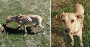 These Abandoned Dogs Were Skin And Bones Until You Saved Them!
