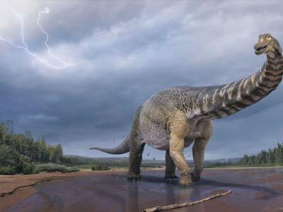 Scientists confirm discovery of Australia's largest dinosaur. It's as long as a basketball court