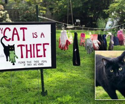 Woman posts 'My Cat Is A Thief' sign next to her pet's stolen items
