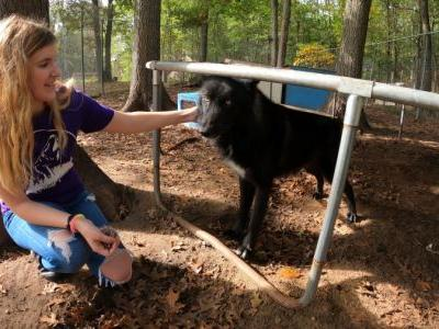 What could happen to wolf-dog hybrids at Muskegon County sanctuary?
