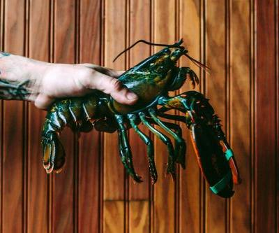 It Will Soon Be Illegal to Boil Lobsters Alive in the U.K