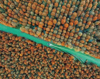 Chinese strategy offers hope in tackling biodiversity losses