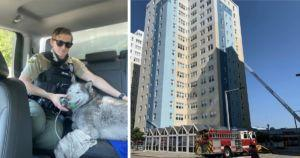 Firefighters Rescue Husky Trapped On 15th Floor Of Burning Building