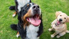 These Are The Most Popular Dog Breeds In Every State