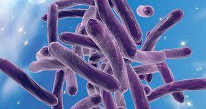 Rapid assay accurately detects drug-resistant TB