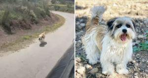 Desperate Dog Relentlessly Chases Car To Beg For A Forever Home