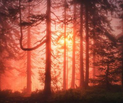 Sunlight Filters through Misty Spruce Forests in Enchanting Photos by Kilian Schönberger