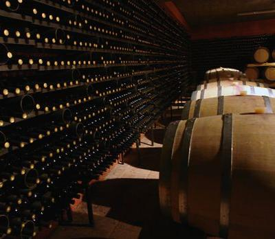 Discover Masseto: Winery of the decade for good reason
