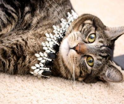 Sundays With Tabs the Cat, Makeup and Beauty Blog Mascot, Vol. 669